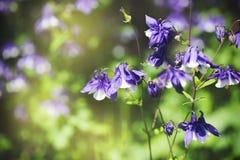 Pretty spring flowers, springtime nature. Pretty spring flowers, springtime nature in garden stock images