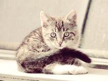 Pretty Striped Kitten Stock Image