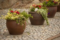 Pretty summer flowers in pots, lined up on a patio. Gorgeous flowers, in pots display on a pebbled patio, with lots of green foliage stock images