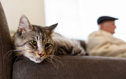 Pretty tabby cat. Close up view of a male domestic tabby cat in a home setting with an elderly man in the background stock images