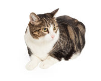 Pretty Tabby Cat Looking to Side Royalty Free Stock Photography