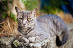 Pretty tabby cat. With selective focus. No studio shot Royalty Free Stock Photography