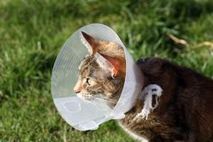 Pretty tabby cat Stock Photo