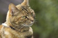 Pretty tabby cat Royalty Free Stock Photos