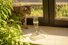Pretty tabby domestic cat is looking curiously royalty free stock photo