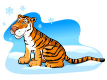 Pretty tiger. On the snow Royalty Free Stock Photos