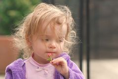 A pretty toddler holding a tiny rose bud Stock Photography