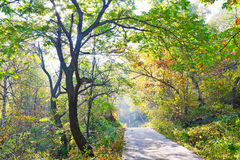 The pretty trees _ autumnal scenery Stock Image