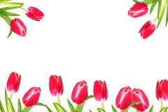 Pretty tulip border Stock Images