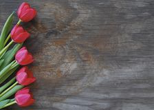 Pretty tulips on a old wood background Stock Images