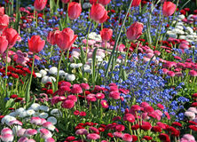 Pretty tulips and summer flowers Stock Photos