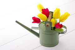 Pretty tulips in watering can. Red and yellow tulip in watering can on white floor Stock Photos