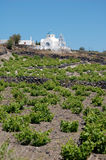 Pretty Vacation Rental with vineyards Stock Photography