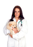 Pretty vet with a cute puppy Stock Image