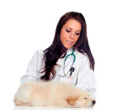Pretty vet with a cute puppy sleeping Stock Photo