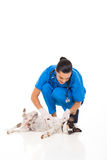 Veterinarian checking dog Stock Image