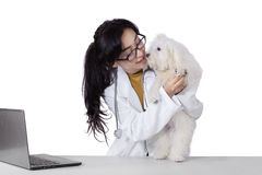Pretty veterinarian checks the dog foot Royalty Free Stock Photos