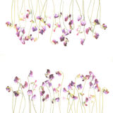 Pretty violet watercolor sweet pea flowers royalty free stock photo