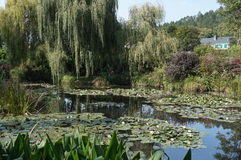 Pretty Water Lily Gardens Stock Photo