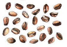 Pretty watercolour colourful coffee beans pattern. Colourful watercolour set of brawn coffee beans print vector illustration