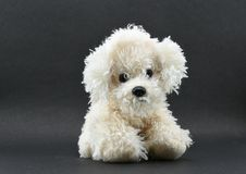Pretty White Dog Toy isolated on black background with lot of space for message Stock Image