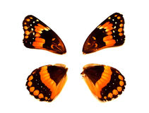 Pretty Wings. Wings Of Orange And Black Butterfly royalty free stock photo