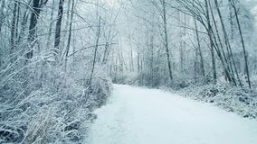 Woodland Path In Snowfall. Pretty winter scene of a path through the woods with snow falling stock video footage