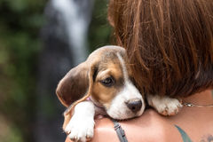 Pretty woman beautiful young happy with small dog puppy beagle. Tropical island Bali, Indonesia. Lady with beagle Royalty Free Stock Images