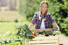 Pretty woman with box of vegetables in her garden Stock Photography