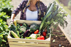 Pretty woman with box of vegetables in her garden Stock Photo