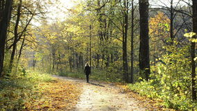 Pretty woman down hill autumn park road tree leaves sunlight. Pretty woman walk down hill on autumn park forest road many colorful tree leaves and sunlight stock footage