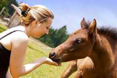 Pretty woman feeds an foal Stock Photography