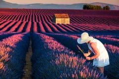 Pretty woman in fields of lavander Stock Images