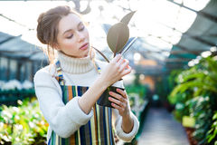 Pretty woman gardener taking care of ficus in flower pot Stock Photography