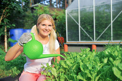 Pretty woman gardener watering salad. Plants outdoor near greenhouse Royalty Free Stock Photo