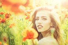 Pretty woman or girl in field of poppy seed royalty free stock photos