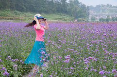 Pretty woman in lavender fields Royalty Free Stock Photography