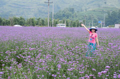 Pretty woman in lavender fields Stock Photo