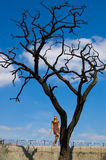 Pretty woman and leafless tree Stock Photography