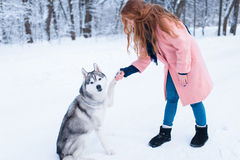 Pretty woman with playful husky dog Royalty Free Stock Photography