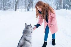 Pretty woman with playful husky dog Stock Photos