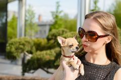 Pretty woman in sunglasses with small chihuahua in hands Royalty Free Stock Photography