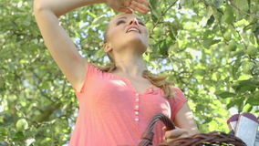 Pretty woman up on a ladder picking apples from an apple tree on a summer day stock footage