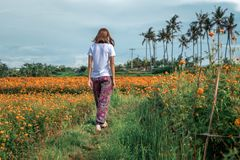 Pretty woman walking in marigold field in the valley. Tropical island of Bali, Indonesia. royalty free stock image