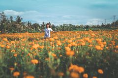 Pretty woman walking in marigold field in the valley. Tropical island of Bali, Indonesia. royalty free stock photography