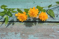 Pretty wooden background with yellow flowers Stock Photo