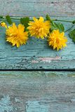 Pretty wooden background with yellow flowers Stock Images