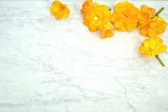Pretty Yellow Begonia Flowers in Spring on gray and white marble surface.  A horizontal  template flat layout with background room