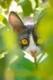 Pretty yellow eyes cat hiding outdoor in green grass. Closeup portrait. Stock Photo