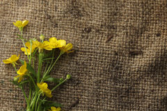 Pretty yellow flowers on burlap Stock Photo